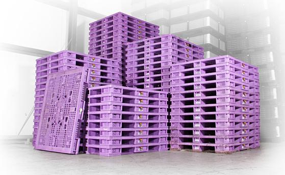 Purple Pallet